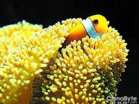 不沾水享受可媲美海底世界的摄影