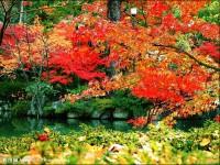 9条贴士教你如何拍好秋天的红叶