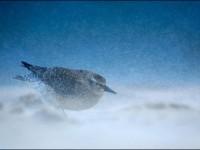 无惧暴风雪 冬季外拍摄影防寒装备