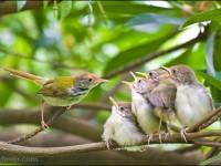 鸟类摄影技巧分享