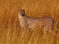 野生动物拍摄守则