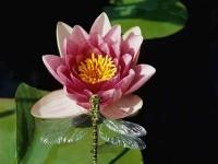 花卉上面昆虫的20个拍摄技巧