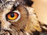 生态摄影怎样抓住动物的神韵
