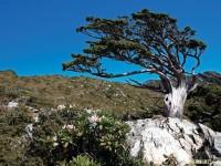 如何让画面展现老树岩石的特色