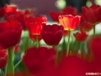 花卉摄影拍摄技巧