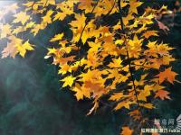 秋季旅行摄影技巧完全攻略