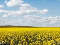 简单4招拍出最壮阔的草原景色