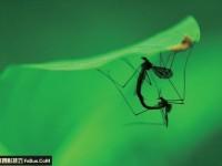 7个简单的昆虫摄影拍摄诀窍