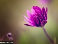学习如何用微距镜头拍花朵