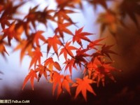 如何拍出漂亮精彩的红叶
