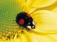 微距摄影昆虫拍摄技巧