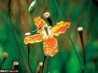 花卉摄影十二招拍出美丽花朵