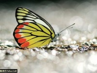 教你拍摄蝴蝶七大注意事项