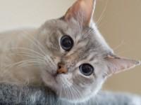 宠物摄影猫咪的拍摄技巧