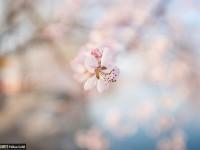 简单七招教你拍好花卉摄影