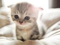 给猫咪拍照的5个正确姿势