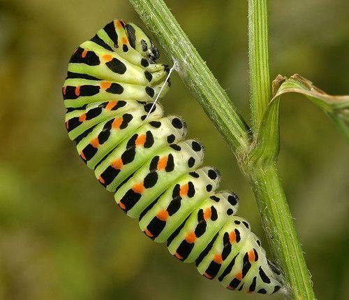 虫震江湖:昆虫的拍摄技巧