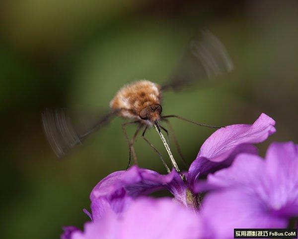 花卉上面昆虫的20个拍摄技巧 laquo; 实用摄影技巧 | 摄影教程 | 单反相机入门教程 - 风云淡 - 放逐心境 品味悠然