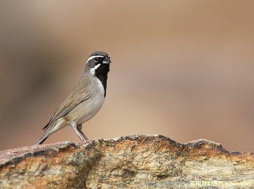 拍出精彩鸟类照片的8个小技巧
