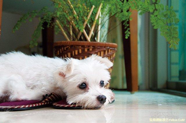 宠物摄影:耐心与机动性成功拍出好照片