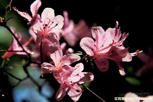 花卉摄影实用摄影技巧