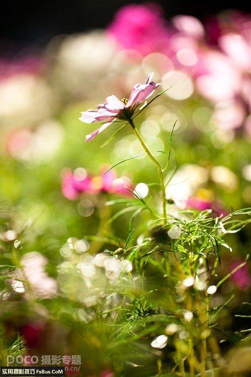 植物摄影简单4招化腐朽为神奇