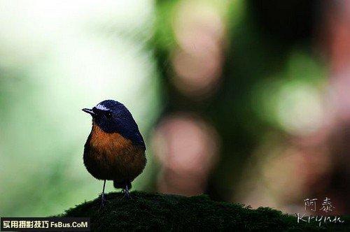 不可不知的打鸟经验和拍摄要诀