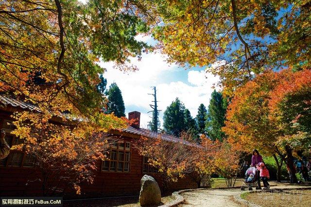 【转载】阴雨天如何拍出枫叶清新透亮的质感 - ddp0228 - 耘影乐园的博客