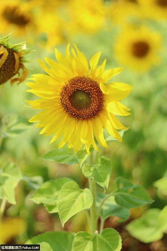 拍出别致花卉五个小技巧