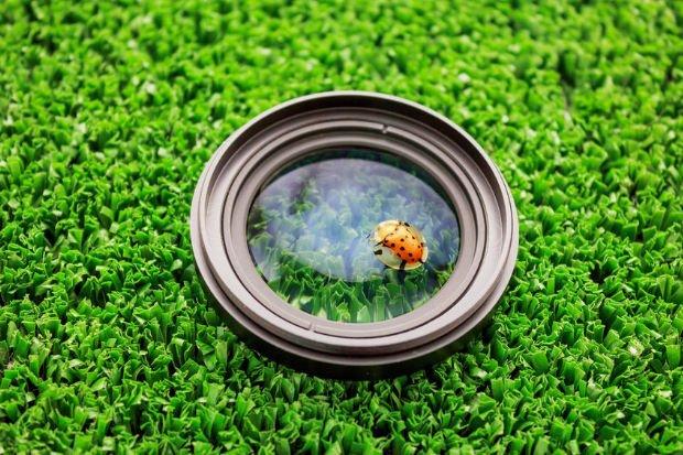 5个有关微距镜头的常见误解