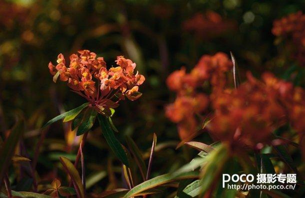 转移焦点拍微距花卉 混合图层制作创意照片