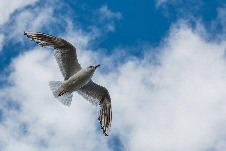 9个拍摄鸟类的入门技巧
