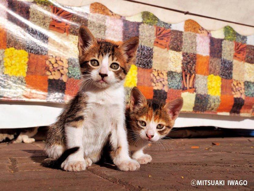 摄影师拍摄猫咪的10个小贴士