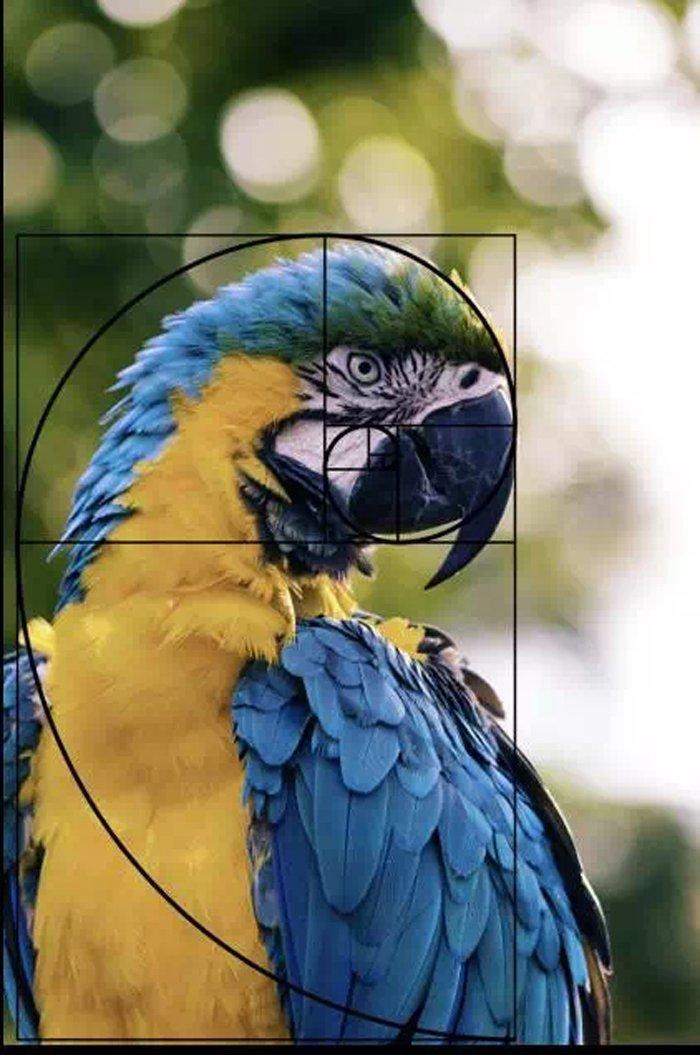 30种实用的摄影构图技巧