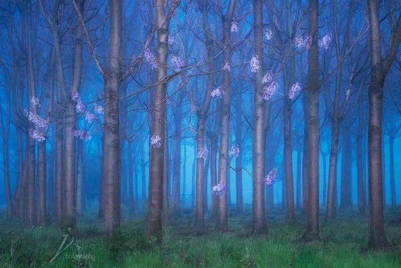 如何提升风光摄影作品的情感表现力